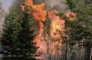 Incendio boschivo nel vicentino