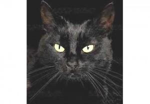 gatto_nero